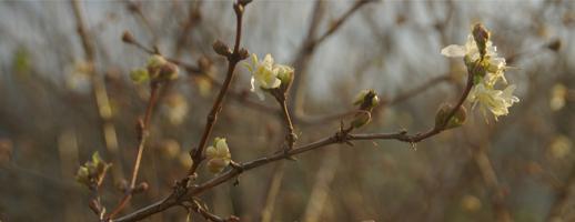Découvrir le jardin botanique de l'école du Breuil
