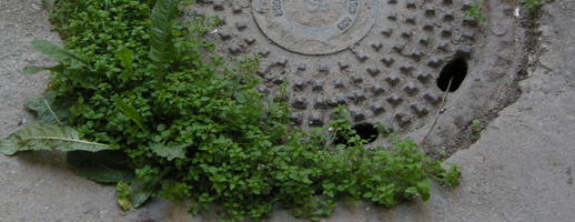 Rejoindre la guérilla gardening