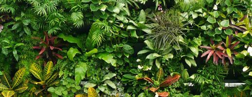 S'offrir un bout de mur végétal