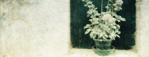 S'occuper de ses jardinières