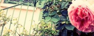 Faire une halte dans le jardin du mus e de la vie - Jardin du musee de la vie romantique ...