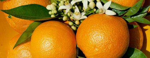 Décorer ses oranges pour Noël